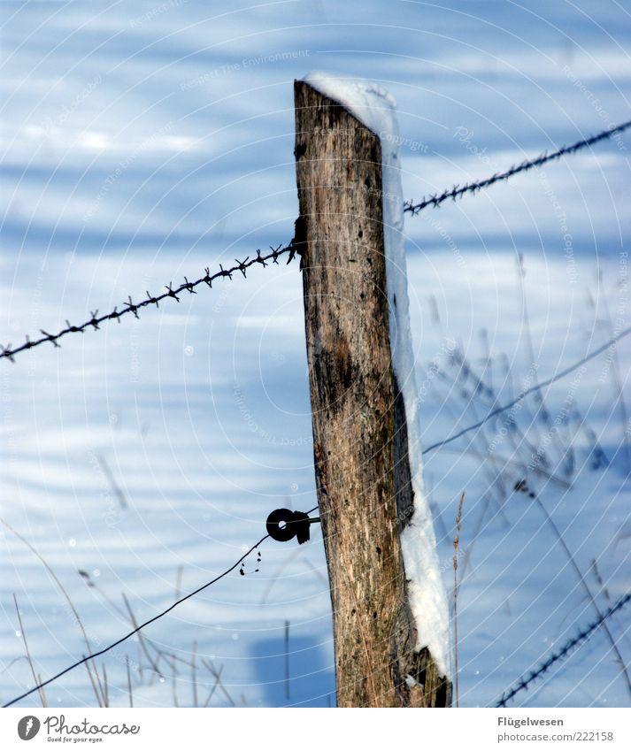 Gefangen im Schnee Winter Klima Wetter Eis Frost Wiese Feld kalt Sicherheit Platzangst Zaun Stacheldraht Zaunpfahl Stacheldrahtzaun Holzpfahl Schneedecke