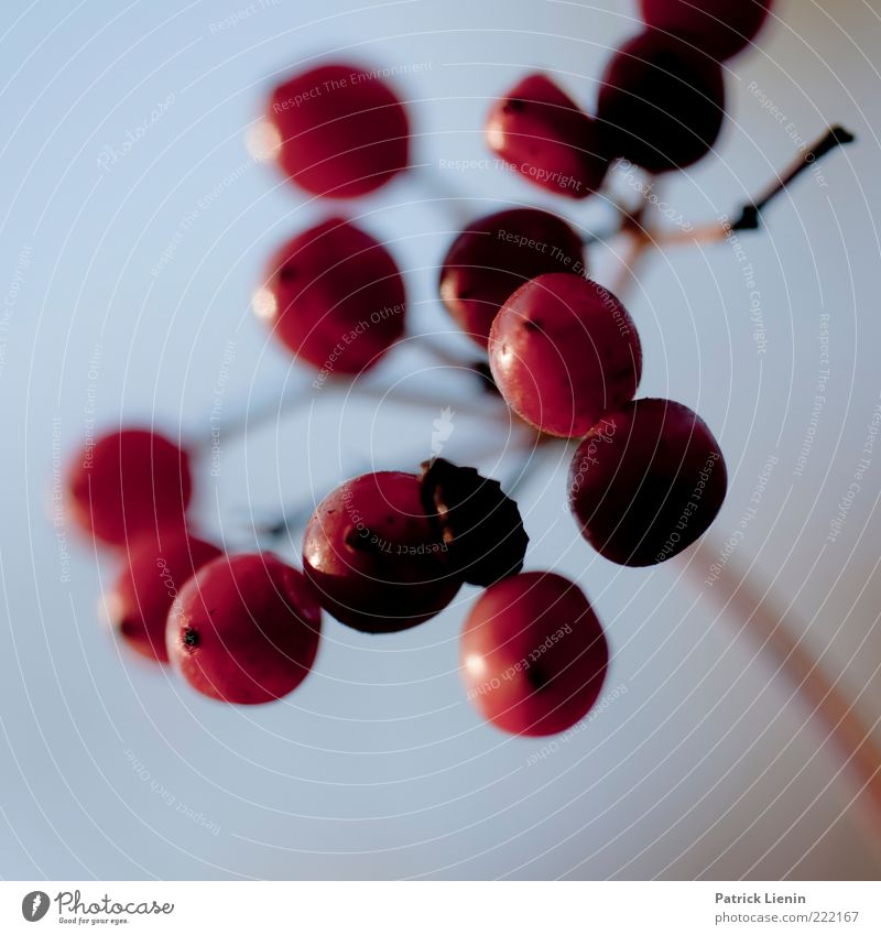 bird food Himmel Natur schön Pflanze rot Umwelt Luft glänzend Frucht frisch natürlich rund Urelemente Stengel lecker