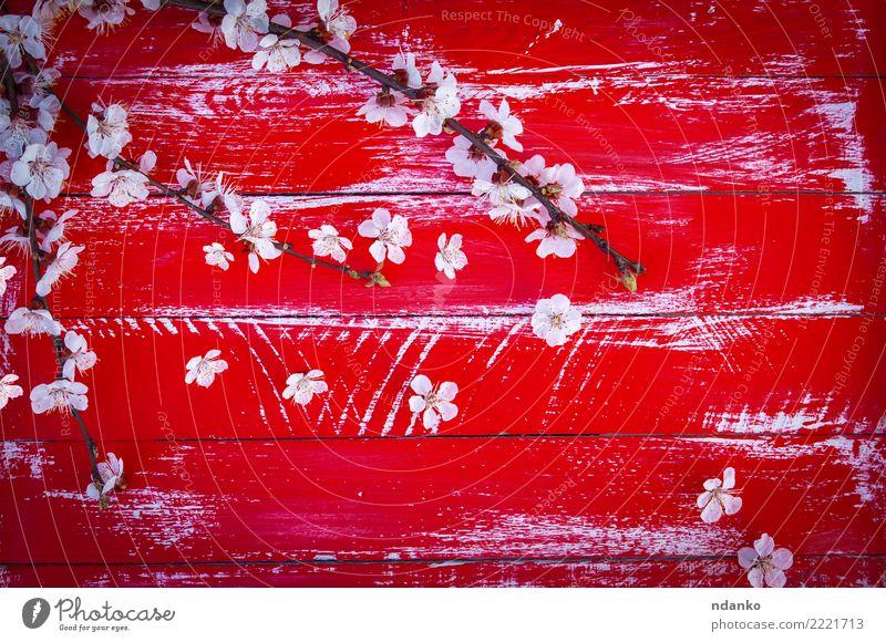 Natur Pflanze weiß Baum Blume rot Blatt Blüte natürlich Holz hell Dekoration & Verzierung frisch Blühend Beautyfotografie Blütenblatt