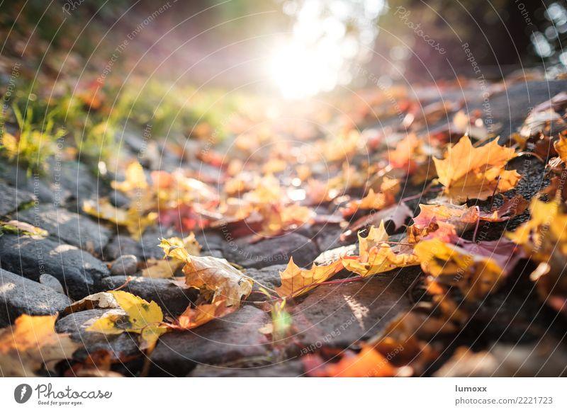 autumn is okay Natur grün Blatt Straße gelb Herbst grau braun Herbstlaub Pflastersteine Straßenrand Graz