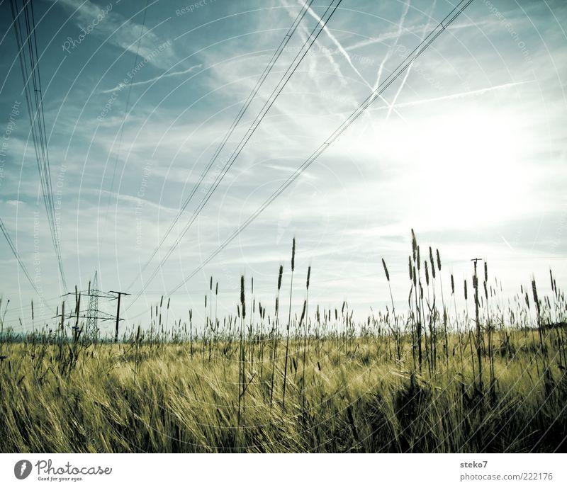 [99] liniert Himmel Sonne Gras Landschaft Feld Energiewirtschaft Elektrizität Getreide Strommast Natur Hochspannungsleitung Strukturen & Formen Kondensstreifen