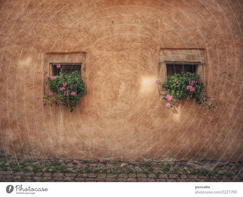quadratwurzel aus zwei Pflanze Altstadt Haus Architektur Fassade Fenster Zufriedenheit Idylle Tradition Stadt Vergangenheit Vergänglichkeit Quadrat Pelargonie