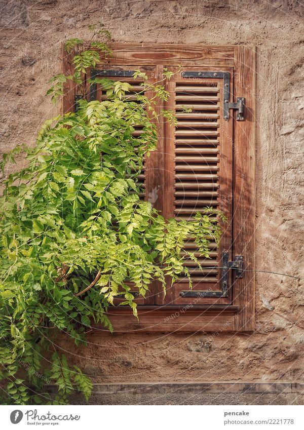 einfach mal liegenbleiben Pflanze Baum Dorf Altstadt Fassade Fenster alt Fensterladen geschlossen Grünpflanze schlafen Elsass ruhig Farbfoto Außenaufnahme