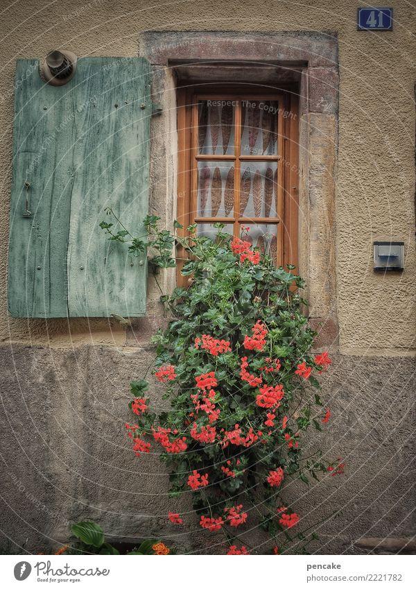 wachsen und gedeihen   topfpflanzen Pflanze Altstadt Haus Mauer Wand Fenster alt authentisch Freundlichkeit nah niedlich Stadt Wärme Pelargonie Topfpflanze