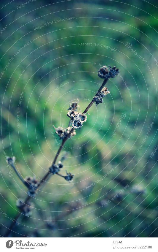 titellos Natur Pflanze Herbst Gras Sträucher Wiese braun grün schwarz Farbfoto Außenaufnahme Nahaufnahme Detailaufnahme Menschenleer Textfreiraum oben