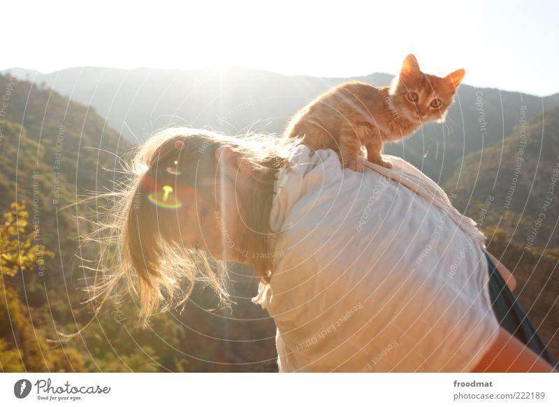 katzenbuckel Frau Mensch Jugendliche Freude Sommer Tier Leben feminin Glück Katze Tierjunges klein Erwachsene Rücken sitzen Kitsch