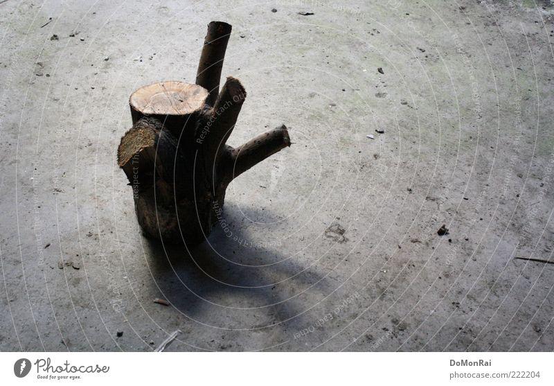 Heinz Baum Beton Holz grau Traurigkeit Trauer Einsamkeit stagnierend Baumstumpf Farbfoto Textfreiraum rechts Tag Schatten Menschenleer 1 entwurzelt geschnitten