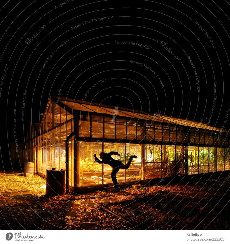 lichtspielhaus Mann Erwachsene 1 Mensch Umwelt Natur Pflanze Klima Nutzpflanze Topfpflanze Garten rennen Spielen Gewächshaus nachhaltig Wissenschaften Scheibe