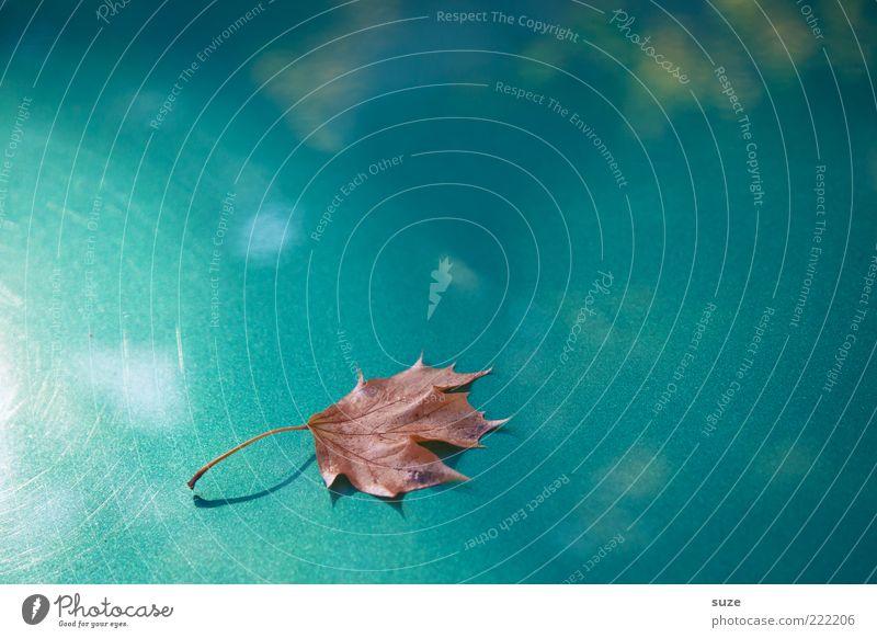 Blatt Natur schön Pflanze Einsamkeit Herbst Zeit Wetter außergewöhnlich glänzend ästhetisch einzeln Jahreszeiten türkis Herbstlaub herbstlich