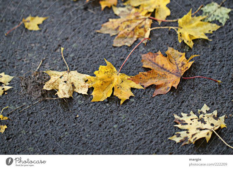 Schmuddel - Herbst Natur alt Pflanze Blatt gelb Umwelt Straße Traurigkeit Stimmung Wetter Regen dreckig nass Trauer Asphalt