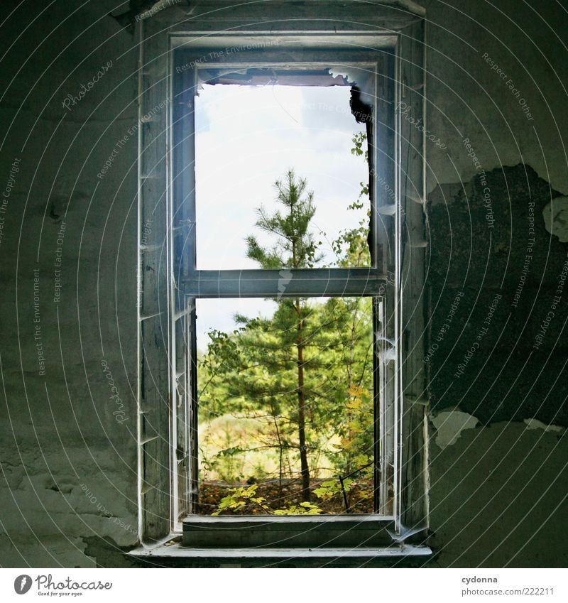 Aussichtsreich Natur alt Baum ruhig Leben Wand Fenster Mauer Raum Umwelt Zeit ästhetisch Wachstum kaputt Wandel & Veränderung Vergänglichkeit