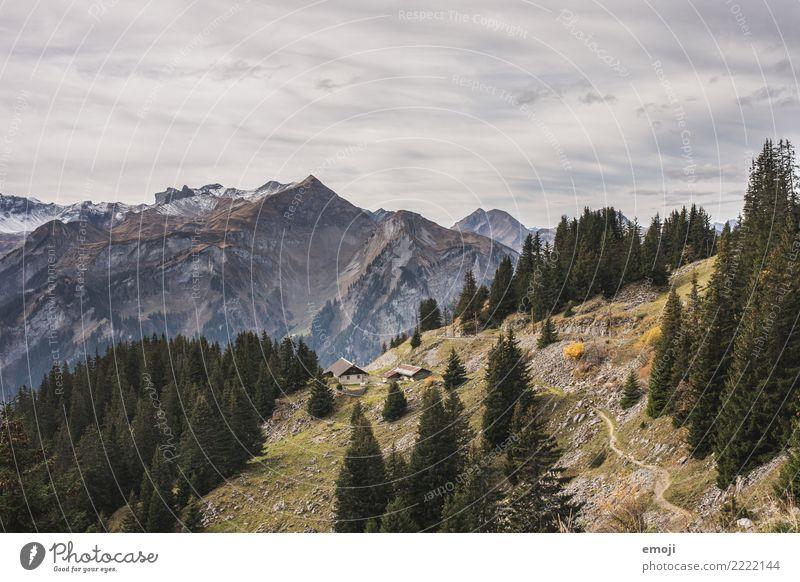 Schynige Platte Natur Sommer Landschaft Wald Berge u. Gebirge Umwelt außergewöhnlich Tourismus wandern Aussicht Schönes Wetter Gipfel Alpen Schweiz Alm