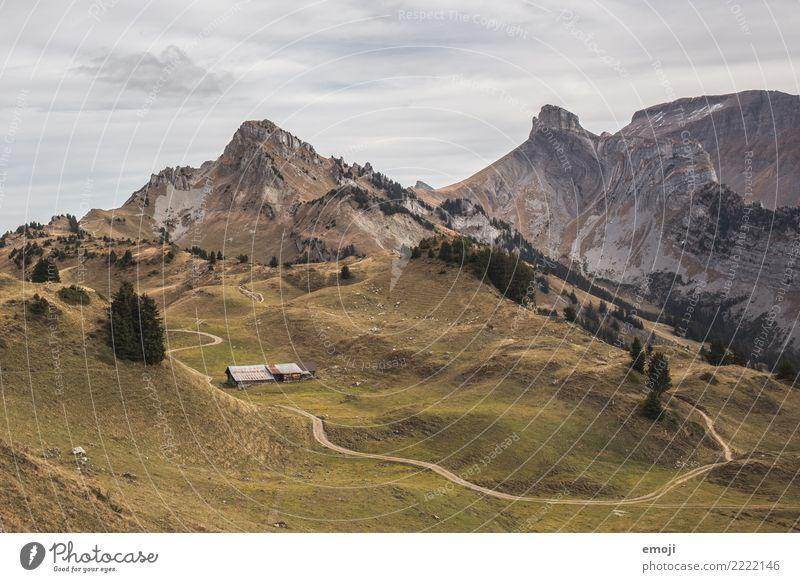 Schynige Platte Umwelt Natur Landschaft Sommer Schönes Wetter Alpen Berge u. Gebirge Gipfel außergewöhnlich Aussicht Schweiz Tourismus wandern Wanderausflug