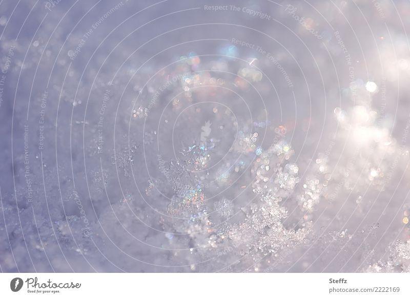 Schnee von morgen Umwelt Natur Winter Klima Wetter Eis Frost Schneefall frieren glänzend kalt nass schön grau weiß Winterstimmung Lichtstimmung Schneeflocke