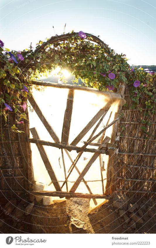 golden gate alt Blume Sommer authentisch Wandel & Veränderung Schutz Vergänglichkeit einzigartig verfallen Tor Verfall Hütte Eingang Zaun Zerstörung Haus