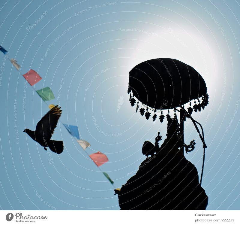 Sonnenschirm Himmel Wolkenloser Himmel Sonnenlicht Schönes Wetter Kathmandu Nepal Asien Tier Taube Flügel 1 fliegen leuchten ästhetisch Frieden Freiheit Vogel