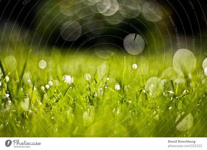 Tropfenpanorama Natur Pflanze Wasser Wassertropfen Sommer Schönes Wetter Gras Wiese grün Tau nass feucht Kreis Wachstum Blendeneffekt glänzend frisch Halm