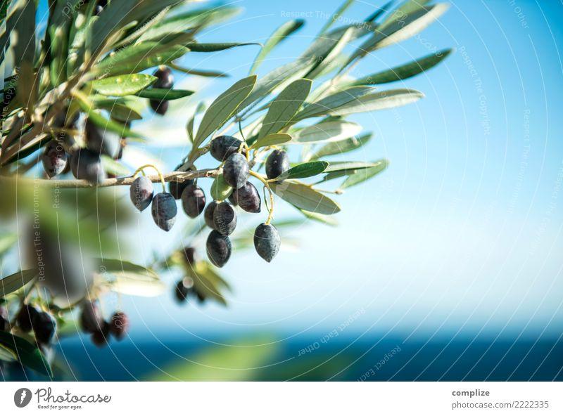 Olivenbaum am Mittelmeer Natur Pflanze Sommer Gesunde Ernährung Sonne Baum Meer Erholung Blatt Strand Gesundheit Küste Gesundheitswesen Lebensmittel Wellness
