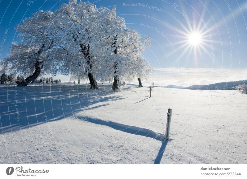 ;-) Ferien & Urlaub & Reisen Winter Schnee Winterurlaub Berge u. Gebirge Umwelt Natur Landschaft Wolkenloser Himmel Klima Schönes Wetter Eis Frost Baum Hügel