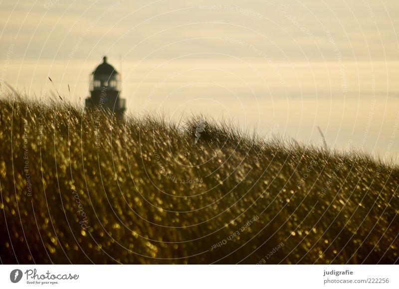 Weststrand Umwelt Natur Landschaft Himmel Sonnenlicht Klima Gras Küste Ostsee Leuchtturm Bauwerk natürlich schön gold Stimmung Ferien & Urlaub & Reisen