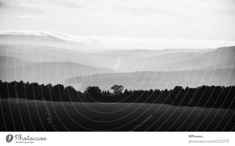 schwarz zu weiß Umwelt Natur Landschaft Wolken Baum Freiheit Wald Baumkrone Silhouette Nebel Nebelschleier Sachsen Sächsische Schweiz Urwald Baumweg