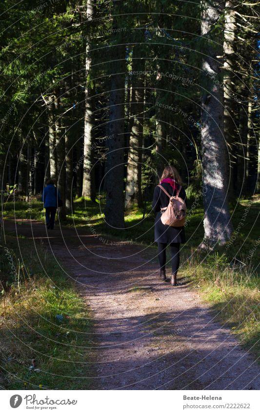 ... ging im Walde so für mich hin Natur Landschaft Sonne Baum Erholung ruhig Wege & Pfade Gefühle Bewegung Stimmung Ausflug gehen Zufriedenheit Freizeit & Hobby