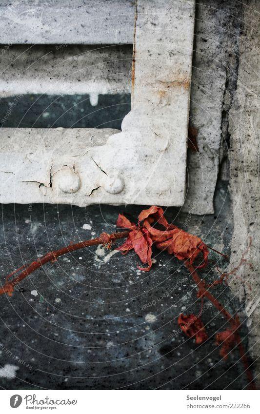 Fahles Verblassen Natur alt weiß Pflanze rot Blatt ruhig schwarz Herbst grau Stein Metall Glas dreckig einzigartig Metallwaren