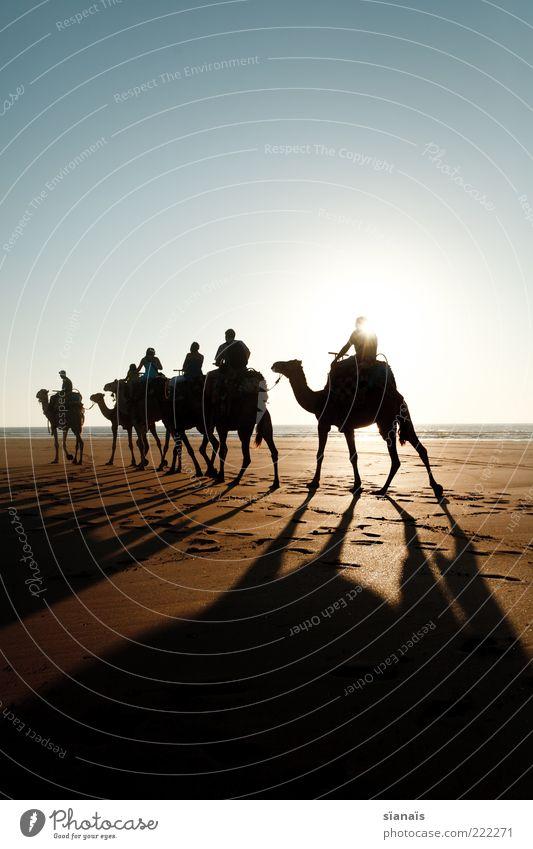 goldener reiter Ferien & Urlaub & Reisen Tier Strand Ferne Küste Freiheit Sand Tourismus wandern Ausflug Schönes Wetter Abenteuer Romantik Kitsch Fernweh