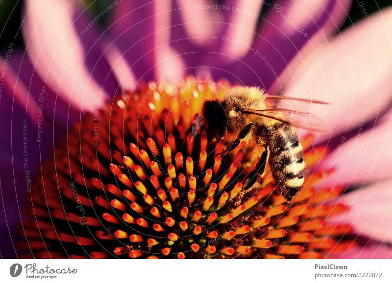 Biene Natur Ferien & Urlaub & Reisen Pflanze schön Blume Tier Blüte Gefühle Wiese Garten Tourismus fliegen Ausflug Blühend Flügel violett