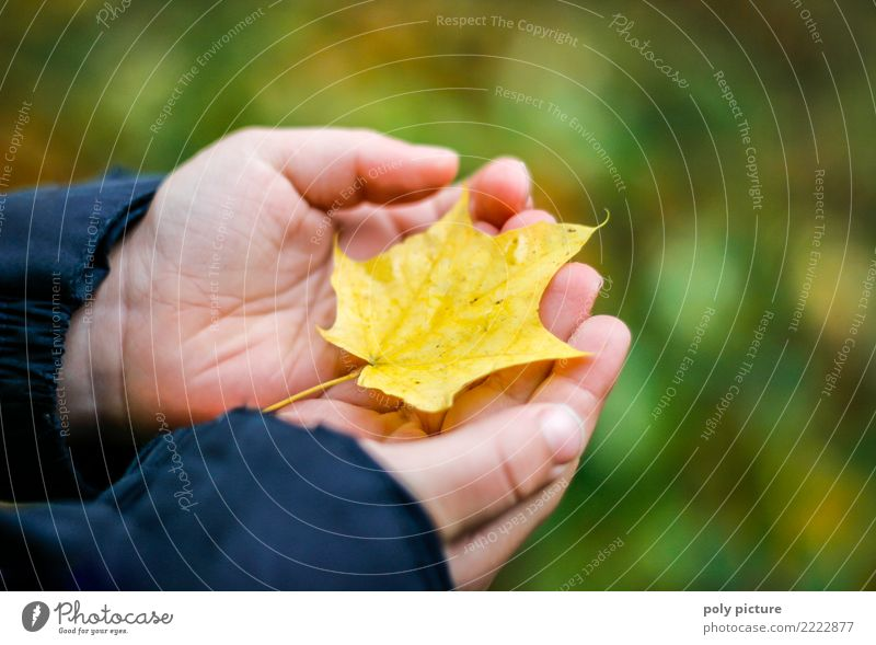 Der Herbst ist da! Jugendliche Leben Hand 1-3 Jahre Kleinkind 3-8 Jahre Kind Kindheit Umwelt Natur Schönes Wetter Blatt Erholung Umweltverschmutzung