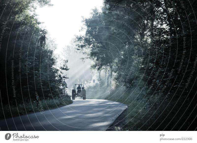 trekking Mann Erwachsene 1 Mensch Sommer Schönes Wetter Baum Wald Straße Landstraße Kurve Traktor fahren dunkel frisch hell fleißig ruhig reibungslos Morgen