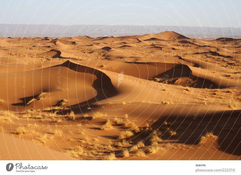 morgens in der Sahara Natur ruhig Ferne gelb Gras Freiheit Sand Landschaft Wärme gold Erde Wüste heiß Gelassenheit Stranddüne Fernweh