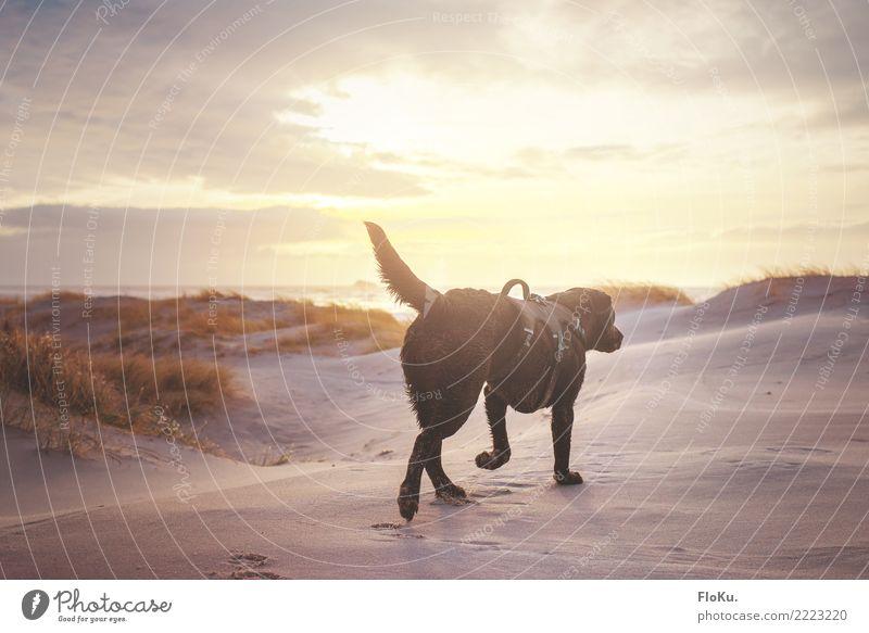 Mir reichts, ich geh an Strand! Ferien & Urlaub & Reisen Tourismus Ferne Freiheit Meer Umwelt Natur Landschaft Tier Urelemente Erde Sand Wasser Himmel Sonne