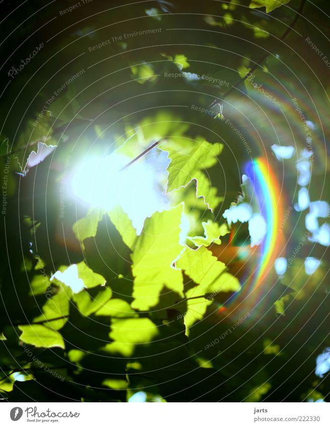 .sonnenschein. Pflanze Sonne Sonnenlicht Schönes Wetter Baum Blatt frisch hell natürlich schön Zufriedenheit ruhig Erholung Natur Regenbogen Farbfoto