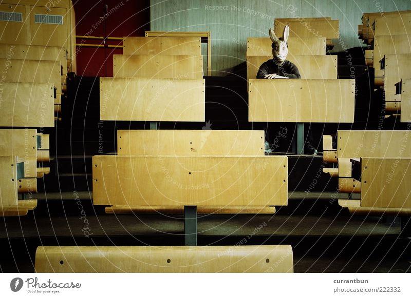 Als Hase im Hörsaal Einsamkeit lustig Holz außergewöhnlich sitzen trist warten einzeln verrückt Beton Tisch Studium Maske Hase & Kaninchen bizarr seltsam