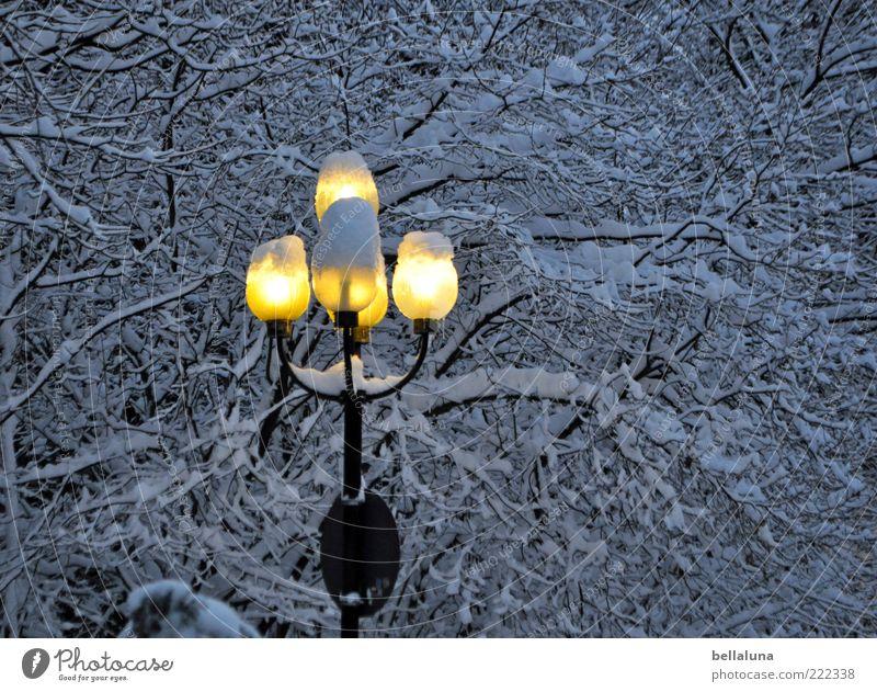 Ich bring Licht ins Dunkel! Natur Baum Winter Lampe kalt Schnee Eis Frost rund Ast leuchten Laterne Abenddämmerung Pflanze