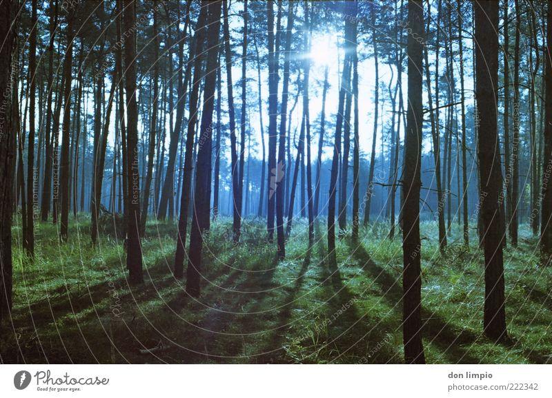 lichtung Natur Baum Sonne grün blau Pflanze ruhig Wald Herbst Gras Holz hell Umwelt hoch natürlich Baumstamm