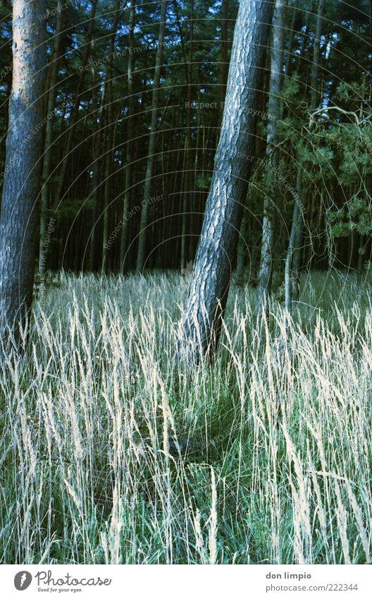 wald Natur Sommer ruhig Wald Herbst Gras Holz Umwelt Wachstum Baumstamm