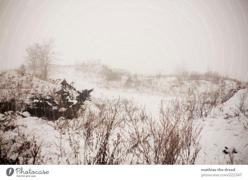 HEUTE WAR NUR EIN VORGESCHMACK Umwelt Natur Landschaft Himmel Wolken Horizont Winter Klima schlechtes Wetter Nebel Eis Frost Schnee Pflanze Baum Gras Sträucher