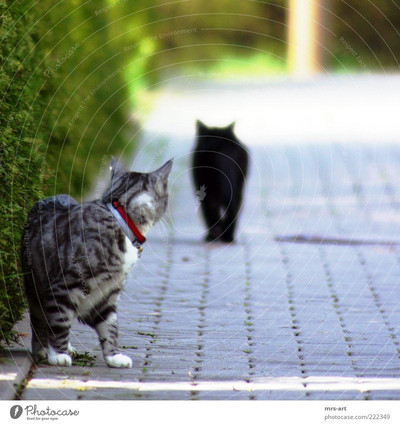 sehnsüchtiger Blick Liebe schwarz Tier Gefühle Katze Freundschaft Stimmung Zusammensein Tierpaar laufen Romantik Lebensfreude entdecken drehen Haustier