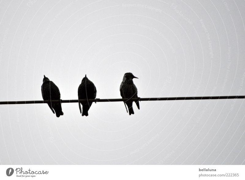 Sit & wait! Natur Tier Vogel sitzen Flügel Tiergruppe Wildtier Hochspannungsleitung 3