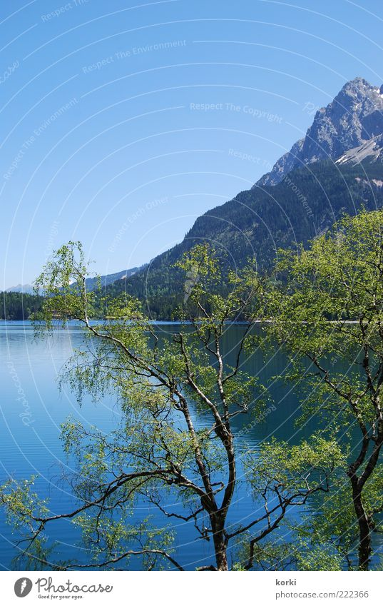 Eibsee Natur Wasser Himmel Baum Pflanze Sommer Blatt Berge u. Gebirge See Landschaft Umwelt Alpen Seeufer Blauer Himmel Geäst Schönes Wetter