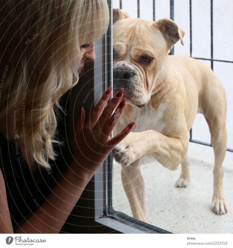 Lilly Raum Balkon Glastür feminin Frau Erwachsene 1 Mensch blond langhaarig Hund Tier beobachten Kommunizieren Wärme Willensstärke Leidenschaft Vertrauen