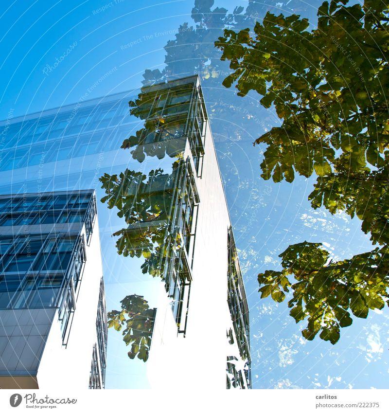 Doppelhaushälfte Wolkenloser Himmel ästhetisch Haus Bürogebäude Fenster Fassade Fassadenverkleidung Baum grün blau Doppelbelichtung Ecke Froschperspektive weiß