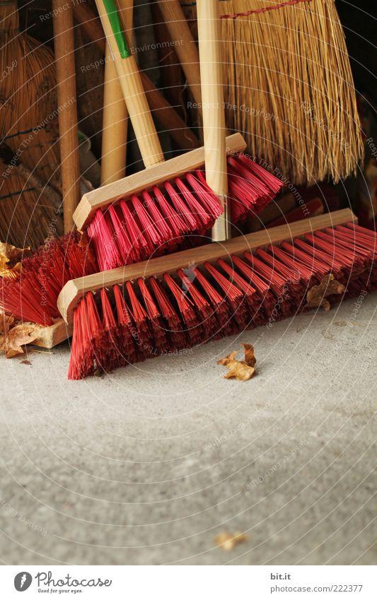 lauter Besen Blatt Herbst Holz Arbeit & Erwerbstätigkeit Ordnung Sauberkeit Reinigen Dienstleistungsgewerbe Teamwork Herbstlaub Werkzeug Haushalt Gartenarbeit Umweltverschmutzung Selbstständigkeit fleißig