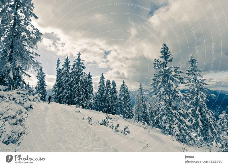 Einbruch Winter Schnee Winterurlaub maskulin 1 Mensch Natur Himmel Wolken Baum Berge u. Gebirge Wege & Pfade laufen wandern hoch kalt blau weiß ruhig Idylle