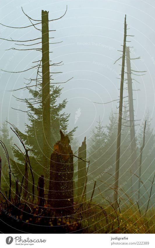 Dämmerung senkte sich von oben Natur Baum Pflanze Wald kalt dunkel Herbst Tod Landschaft Stimmung Umwelt Nebel Wachstum kaputt Klima bedrohlich
