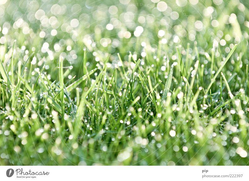 tau(send)perlen Umwelt Natur Pflanze Wasser Wassertropfen Schönes Wetter Gras Rasen frisch hell nass grün bizarr Tau Morgen feucht Reflexion & Spiegelung