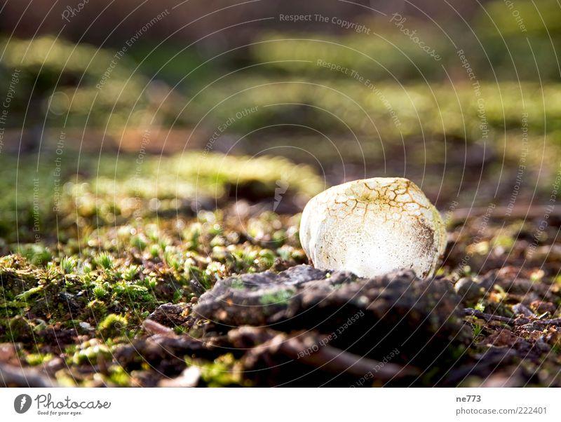 Pilzglühen im Moor Natur Erholung träumen Landschaft Umwelt glänzend Boden entdecken leuchten Moos Kristalle Sumpf