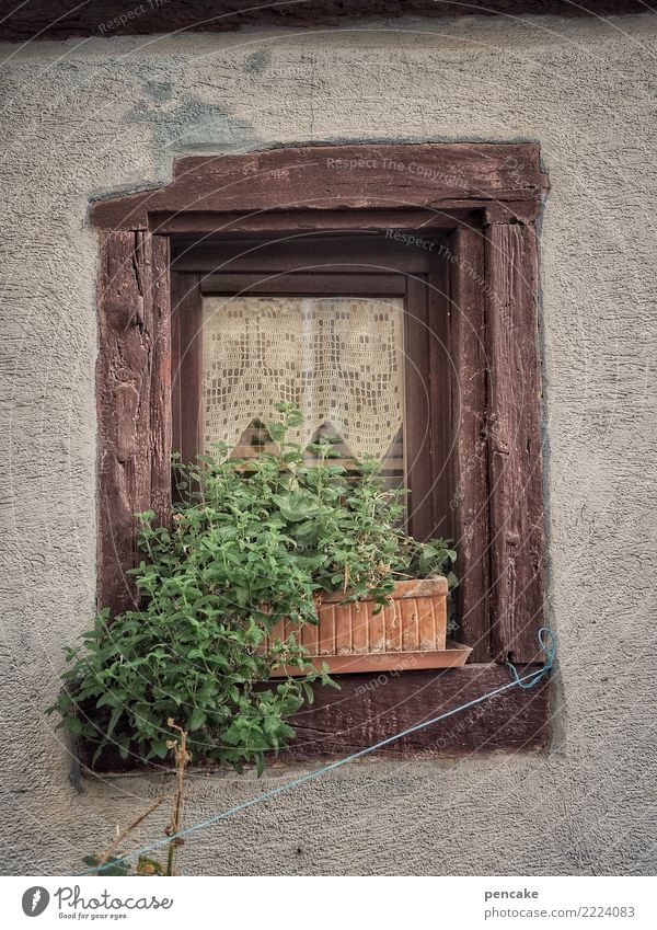 urban gardening (remake) alt Pflanze Stadt grün Fenster Holz authentisch Seil Kräuter & Gewürze Altstadt Gardine Fensterbrett Topfpflanze Elsass